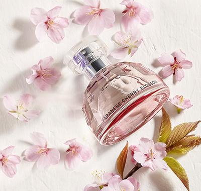 【限定】桜の香り、再登場🌸🌸